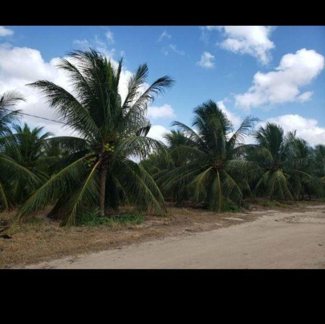 Linda Fazenda com 84 hectares próximo a Vera cruz - Foto 3