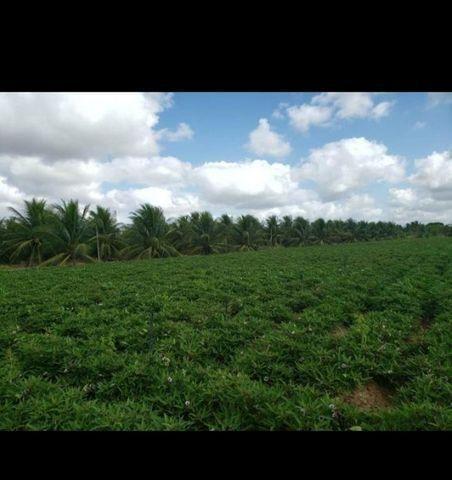 Linda Fazenda com 84 hectares próximo a Vera cruz - Foto 2