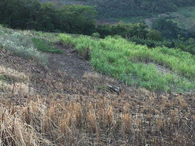 Sitio em Santo Antônio 8 Ha com Campo, Roça e Galpão. Linda Vista. Peça o Vídeo Aéreo - Foto 15