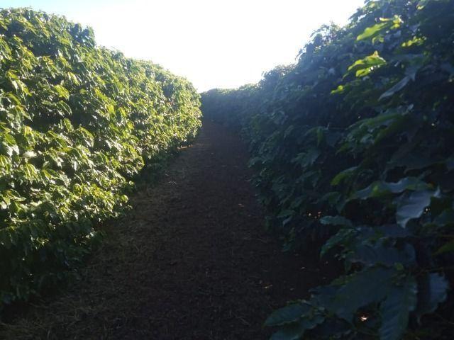 Fazenda em piumhi 55 alqueires 6.000.000.00 - Foto 3