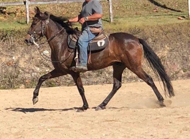 Cavalo marcha picada top - Foto 4