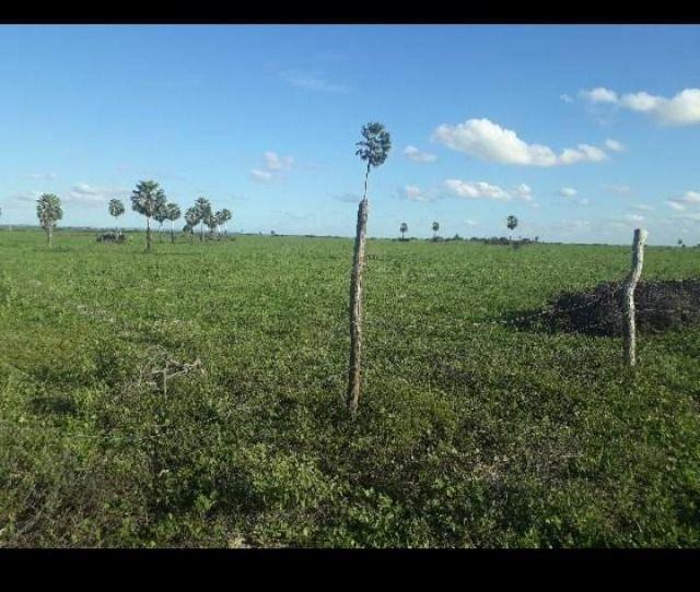 Otima Fazenda com 190 Hectares entre Lagoa de Pedras e Serrinha - Foto 6