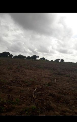 Linda Fazenda com 45 hectares na região monte alegre - Foto 11