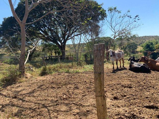 Fazendinha Portal dos Sertões (Codisburgo) - Foto 7