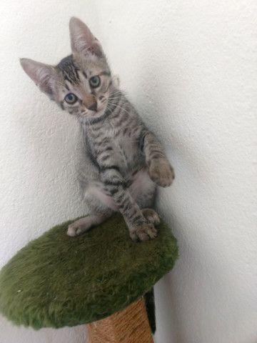 Gatinhos para doação urgente  - Foto 3