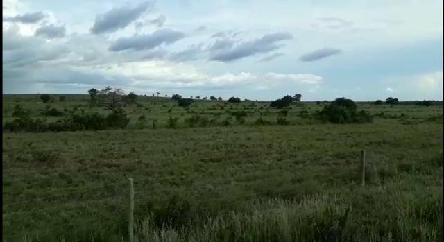 Fazenda de 853 hectares .400 hectares mecanizados . Colinas do Tocantins- TO - Foto 3