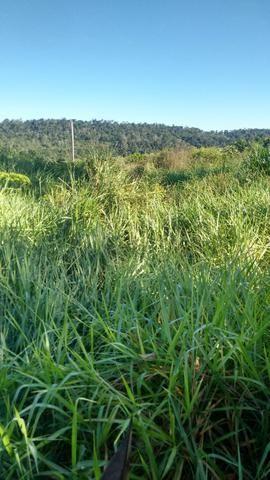 Imperdível vendo excelente Fazenda em Bom Jardim-Ma - Foto 8