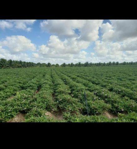 Linda Fazenda com 84 hectares próximo a Vera cruz