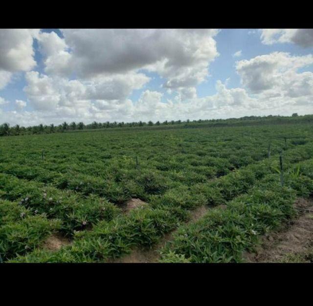 Linda Fazenda com 84 hectares próximo a Vera cruz - Foto 8