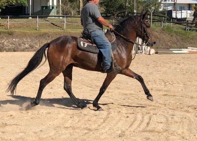 Cavalo marcha picada top
