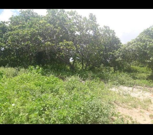 Linda Fazenda com 170 Hectares em Pureza só terra - Foto 7