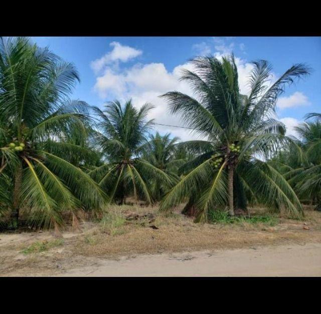 Linda Fazenda com 84 hectares próximo a Vera cruz - Foto 5