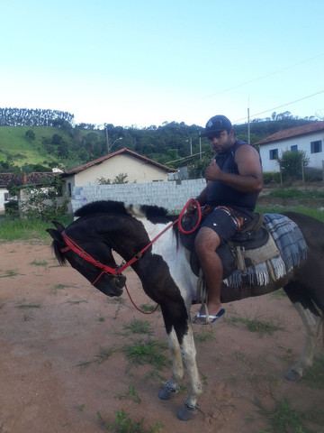 Cavalo Pampa faço catira em égua