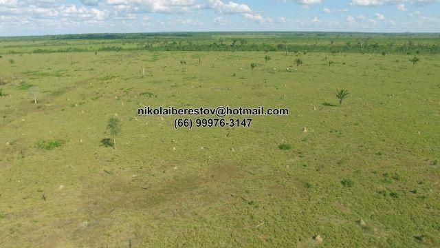 Fazenda 2.500 hectares nordeste mt nikolaiimoveis