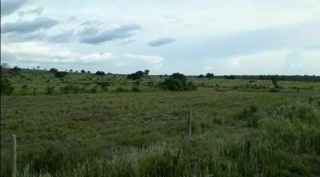 Fazenda de 853 hectares .400 hectares mecanizados . Colinas do Tocantins- TO - Foto 2