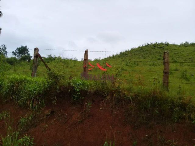 8051 | fazenda à venda em fazenda pinhão, pinhão - Foto 6