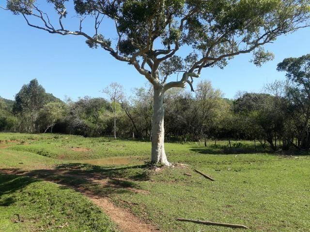 Área de campo em lindolfo collor - * - Foto 5