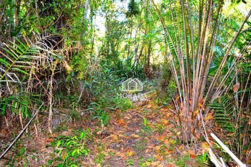 Terreno à venda, 40.920m² por R$ 690.000 - Barra Grande - Maraú/BA - Foto 17