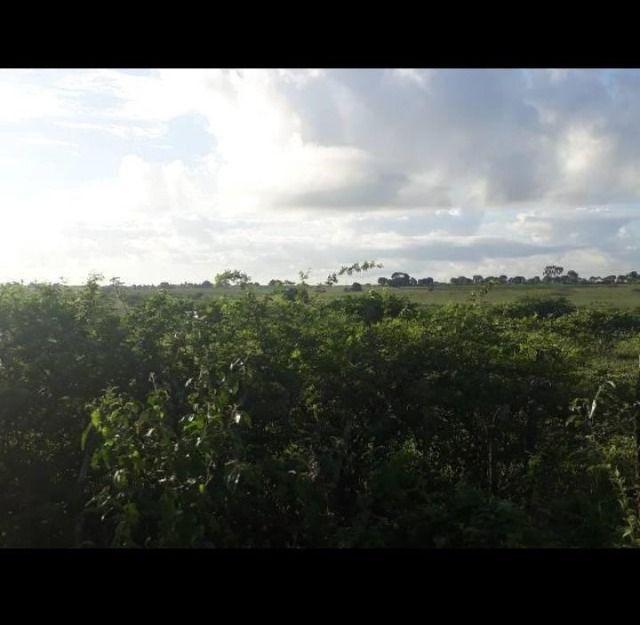 Excelente Fazenda com 42 hectares próximo ao corrego - Foto 4