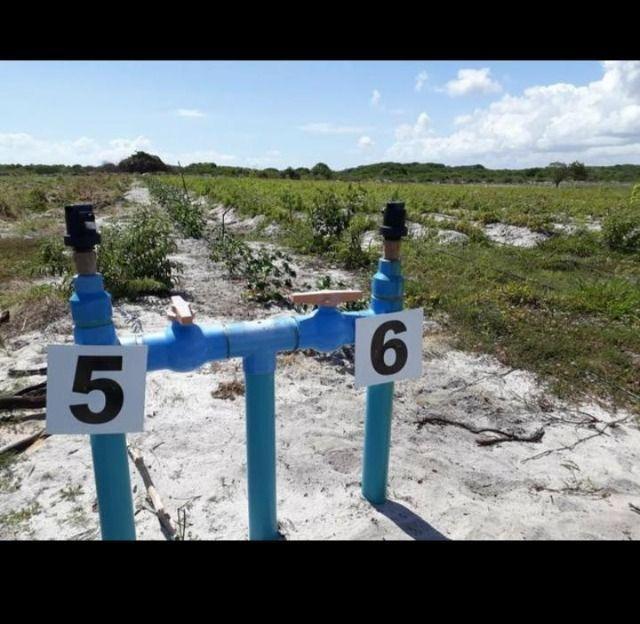 Linda Fazenda com 70 hectares na região de Ceará mirim com rio perene - Foto 8