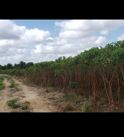 Linda Fazenda com 84 hectares próximo a Vera cruz - Foto 6