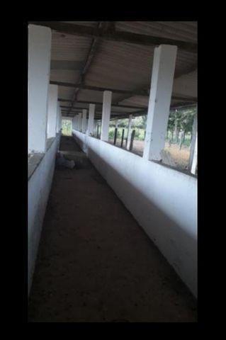 Linda Fazenda com 150 Hectares estruturada na Região de Macaiba - Foto 16