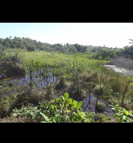 Linda Fazenda com 70 hectares na região de Ceará mirim com rio perene - Foto 11