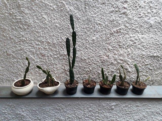 Cactus.  - Foto 2
