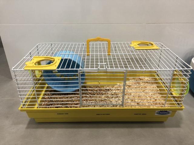 Vendo gaiola completa com Hamster Chinês