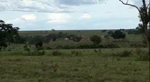 Fazenda de 853 hectares .400 hectares mecanizados . Colinas do Tocantins- TO - Foto 10