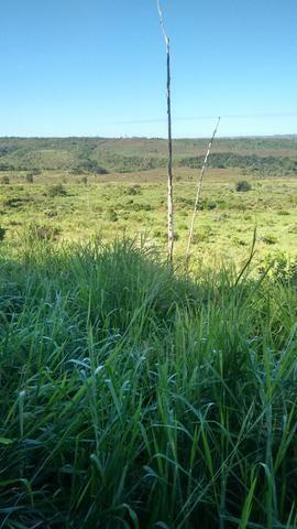 Imperdível vendo excelente Fazenda em Bom Jardim-Ma - Foto 10