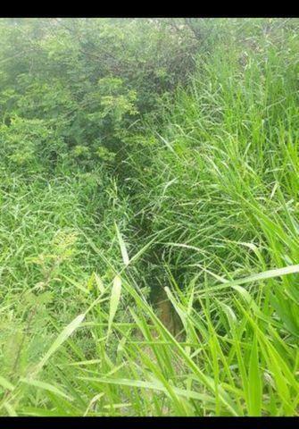 Linda Fazenda com 170 Hectares em Pureza só terra - Foto 8