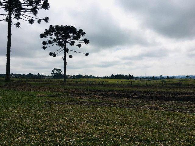 Área Rural em São José dos Pinhais - Foto 6