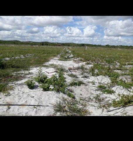 Linda Fazenda com 70 hectares na região de Ceará mirim com rio perene - Foto 13