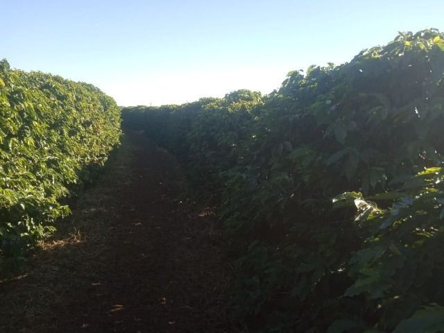Fazenda em piumhi 55 alqueires 6.000.000.00 - Foto 6