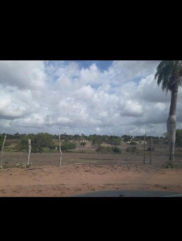 Linda Fazenda com 45 hectares na região monte alegre - Foto 10