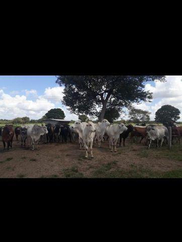 Linda Fazenda com 150 Hectares estruturada na Região de Macaiba - Foto 14