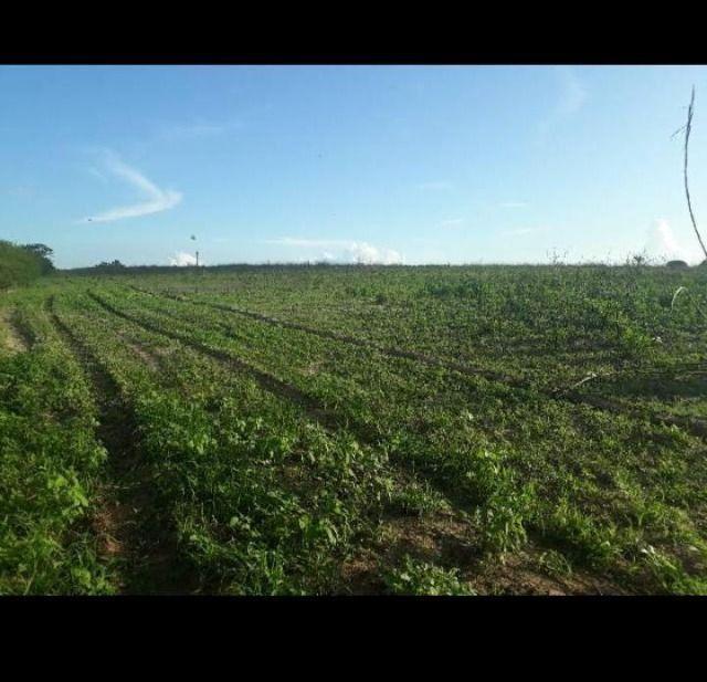Excelente Fazenda com 42 hectares próximo ao corrego - Foto 2