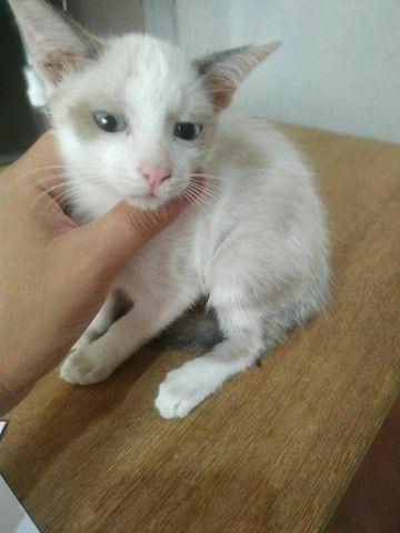 Doação de gatos  - Foto 6