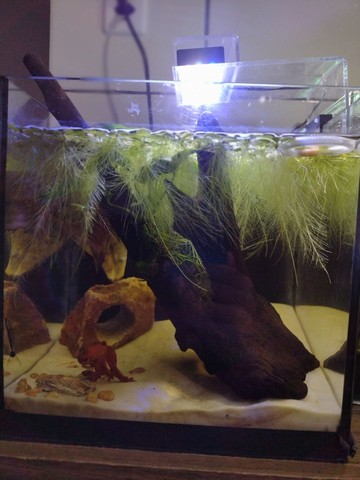 Plantas de superficie aquática