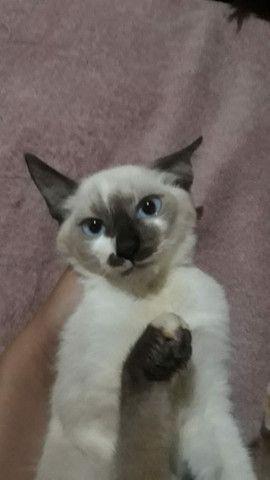 Estou doando esses gatos!!!! - Foto 2
