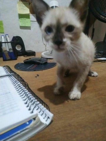 Doação de gatos  - Foto 3