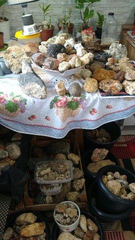 Pedras variadas para coleção  estudo ou decoração - Foto 3