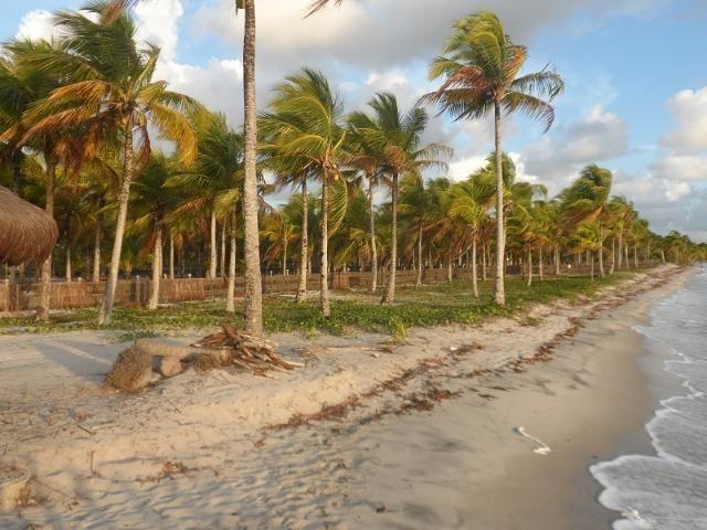 Gleba de Terras, Ilha de Tubarão, Camamu-BA - Foto 6