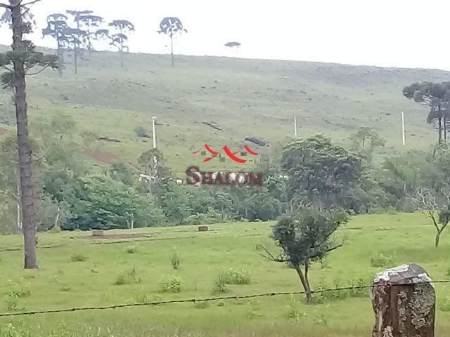 8051 | fazenda à venda em fazenda pinhão, pinhão - Foto 4