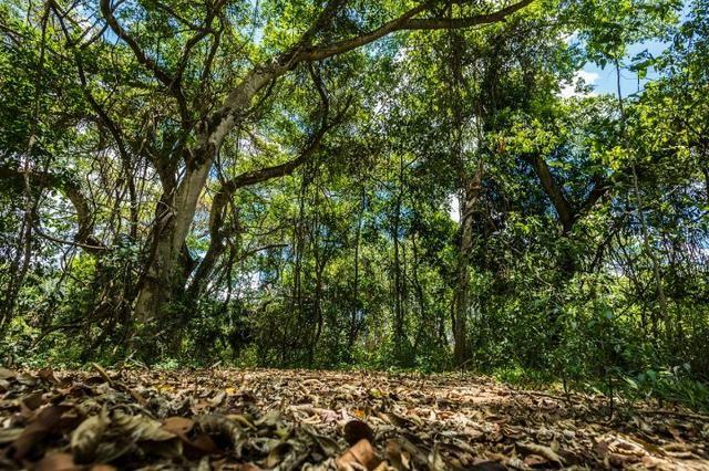 Condomínio de Chácaras Trindade - Complexo Terra Santa - Foto 20