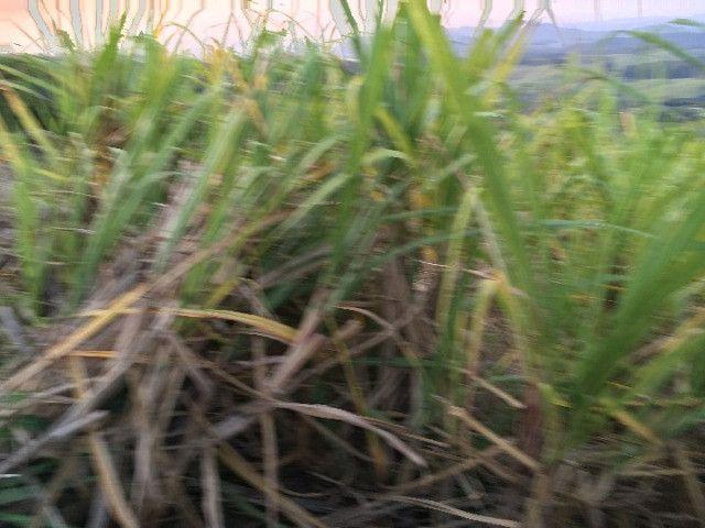 Sitio em Santo Antônio 8 Ha com Campo, Roça e Galpão. Linda Vista. Peça o Vídeo Aéreo - Foto 7