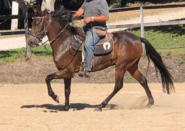 Cavalo marcha picada top - Foto 5