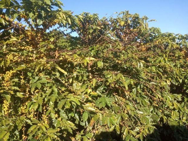 Fazenda em piumhi 55 alqueires 6.000.000.00 - Foto 8