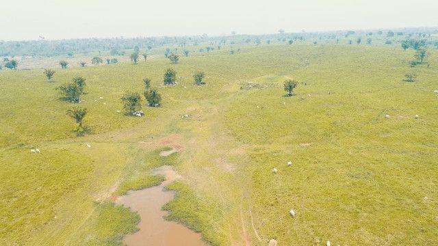 Fazenda próxima de Rio Branco - Acre - Foto 2